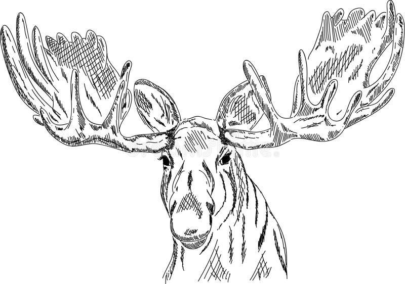 Het hoofd van elanden stock illustratie