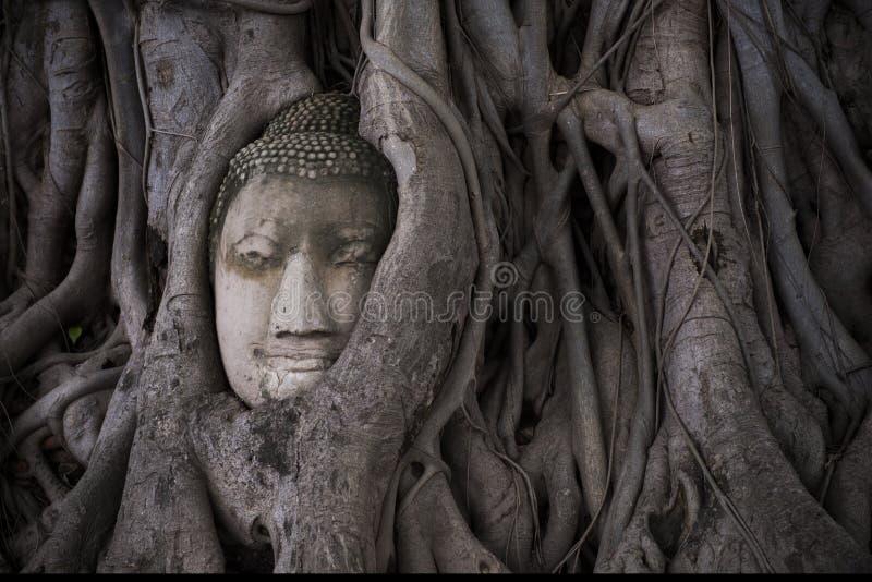 Het hoofd van glimlachboedha door boomwortel bij wat Mahathat in Ayutthaya wordt behandeld die thailand stock foto