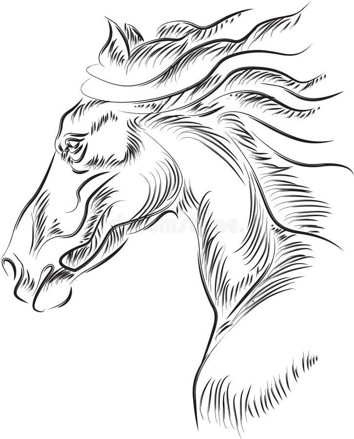 Het hoofd van het paard stock illustratie