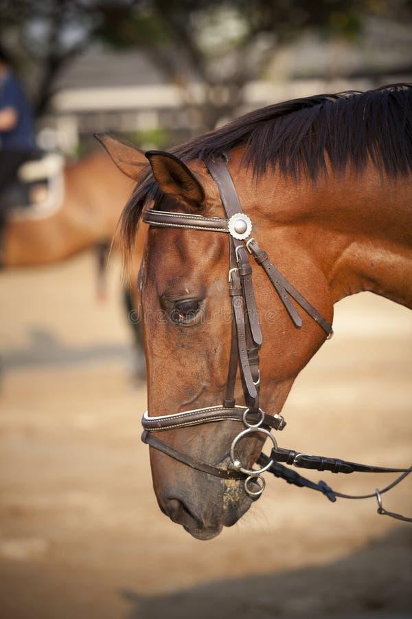 Download Het hoofd van het paard stock foto. Afbeelding bestaande uit zoogdier - 29502038