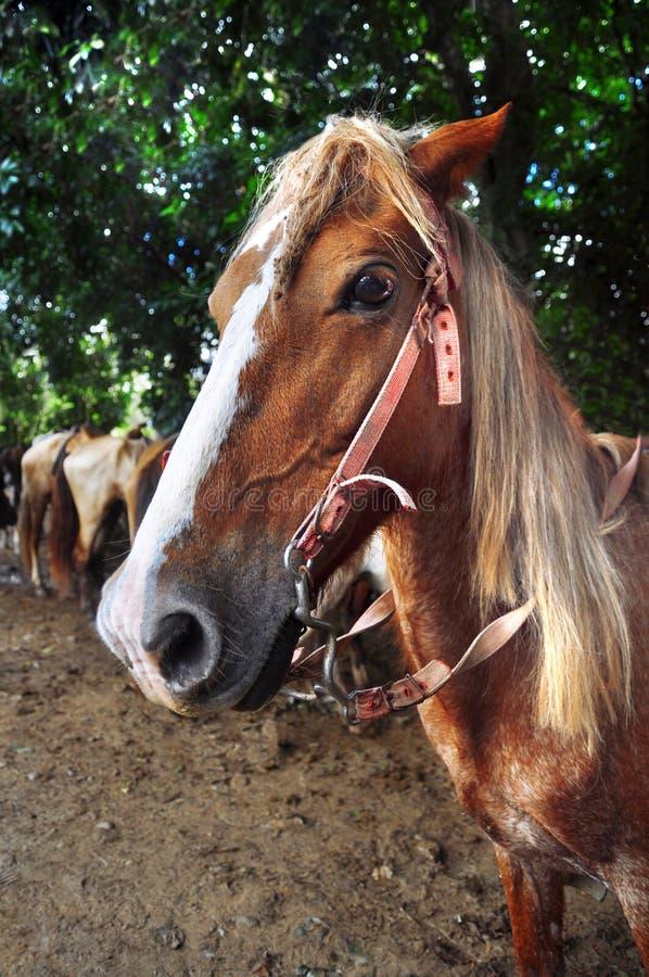 Het hoofd van het paard, close-up stock foto