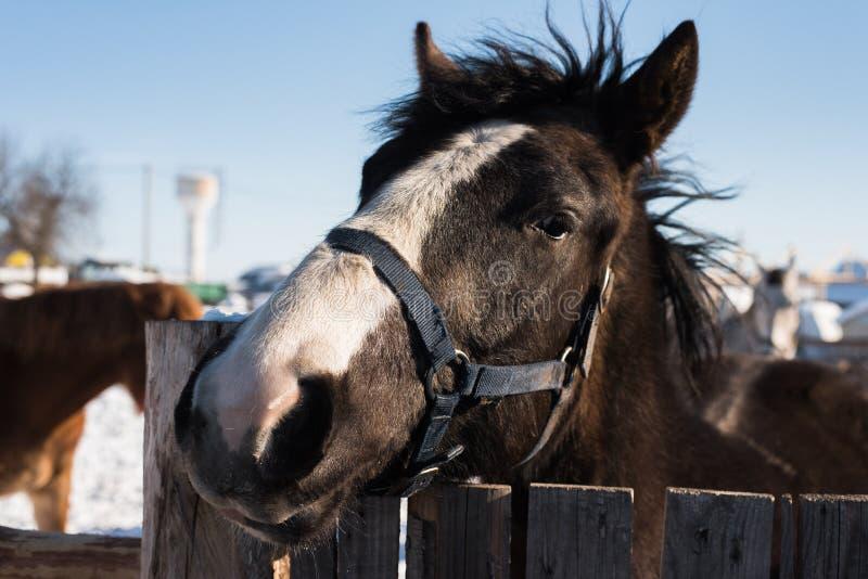 Het hoofd van het paard kijkt uit van achter een houten omheining royalty-vrije stock fotografie