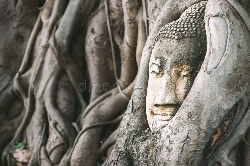 Het hoofd van zandboedha in het beeldhouwwerk van Boedha van boomwortels in het middenlicht van de dagzon in oude Ayutthaya, Thai stock foto