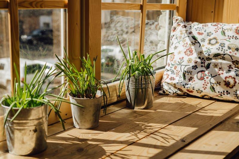 Het Hoofdkussen van de venstervensterbank voor Rust met de Pot van de Grasinstallatie stock afbeelding