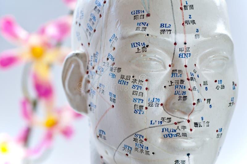 Het hoofdmodel van de acupunctuur royalty-vrije stock fotografie