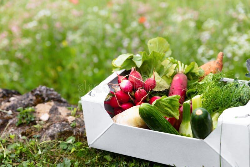 Het hoogtepunt die van de kartondoos van verse organische groenten in een bloem liggen me royalty-vrije stock afbeelding