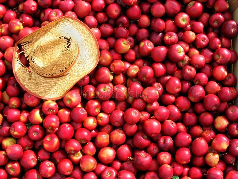 Het hoogtepunt van de bak van rode appelen. stock afbeelding