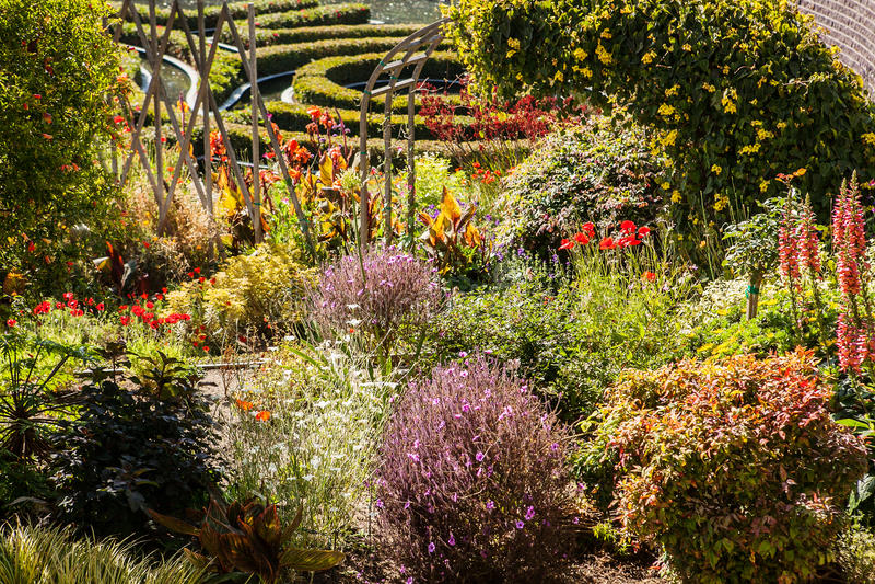Het hoogtepunt van de de zomertuin van installaties en bloemen in tuin royalty-vrije stock foto
