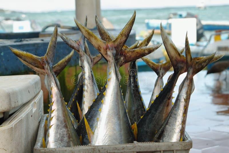 Het hoogtepunt van de emmer van vissen royalty-vrije stock afbeelding