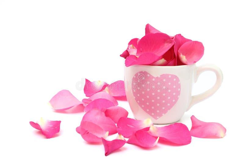 Het hoogtepunt van de kop van roze bloemblaadjes op witte achtergrond stock foto