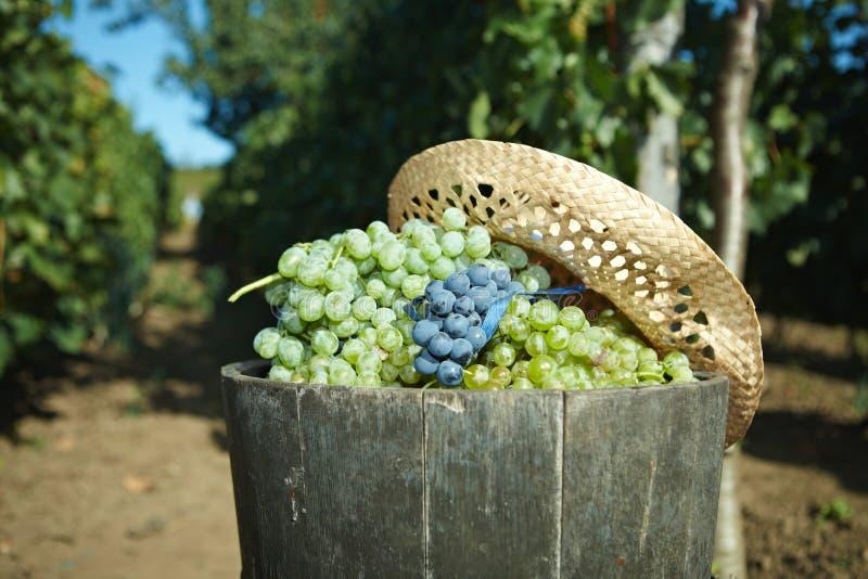 Het hoogtepunt van het uiteinde van druiven stock fotografie