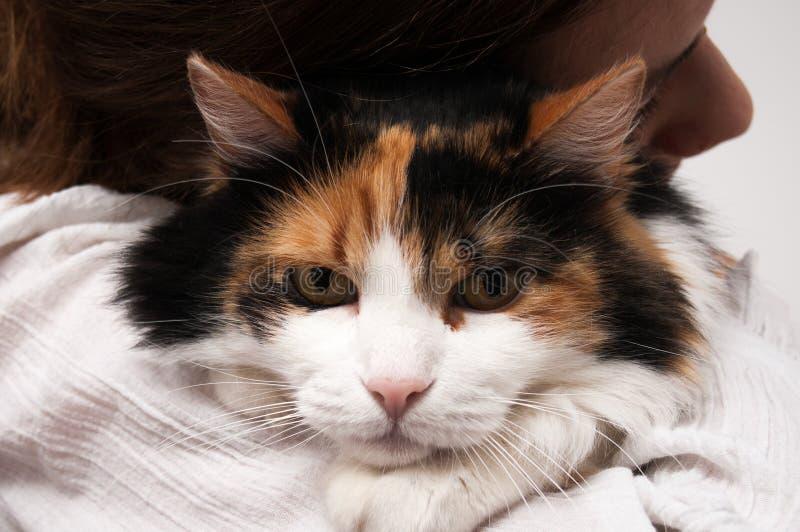 Het houden van een kat in wapens stock fotografie