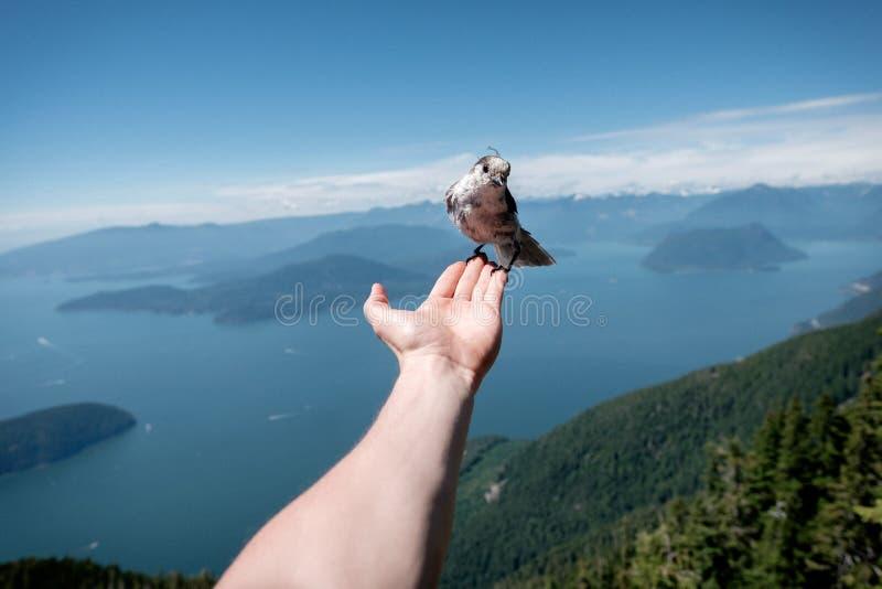 Het houden van een vogel in een palm van mijn hand stock afbeelding