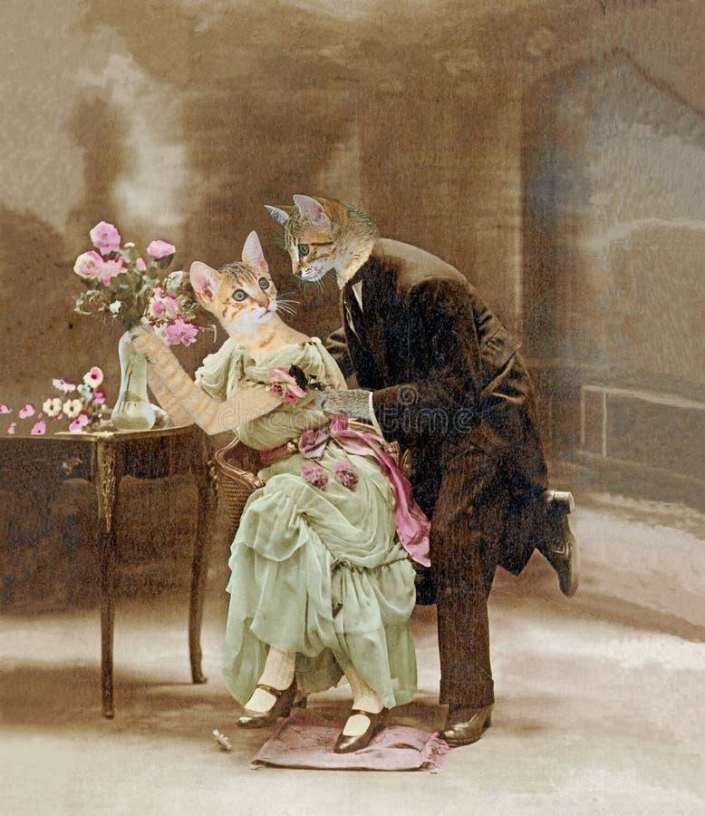 Het houden van van katten in 1900 stock afbeeldingen