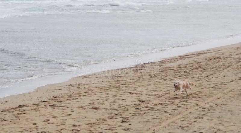 Download Het Houden Van Van Labrador Puppy Stock Foto - Afbeelding bestaande uit daglicht, kust: 39103770