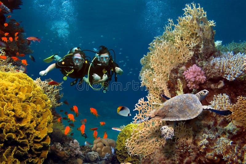 Het houdende van paar duikt onder koralen en vissen stock afbeelding