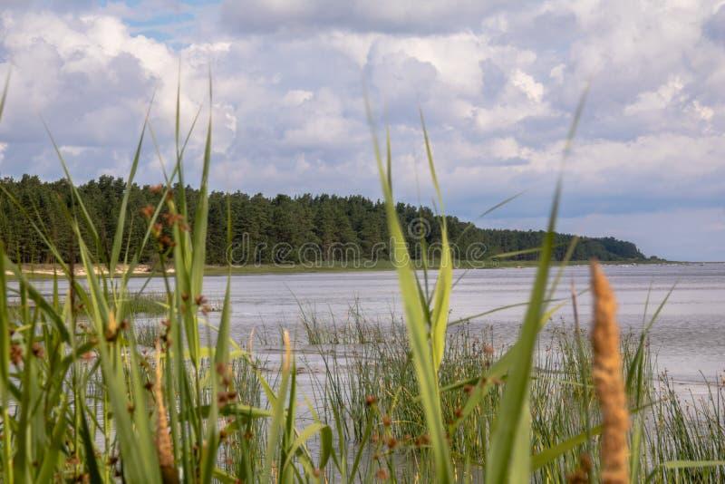 Het hout bij water tegen riet royalty-vrije stock afbeeldingen