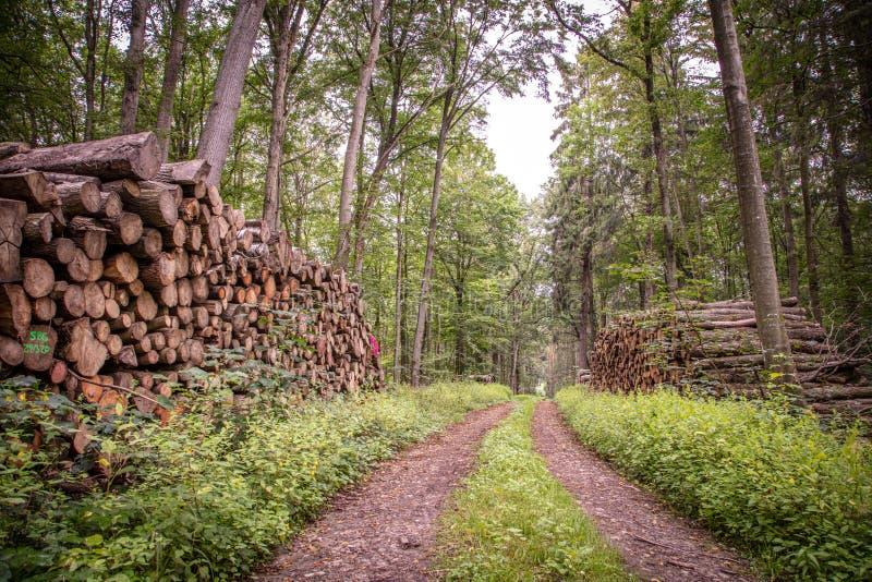 het hout ligt in grote stapels op de linkerzijde en het recht van een bosweg royalty-vrije stock fotografie