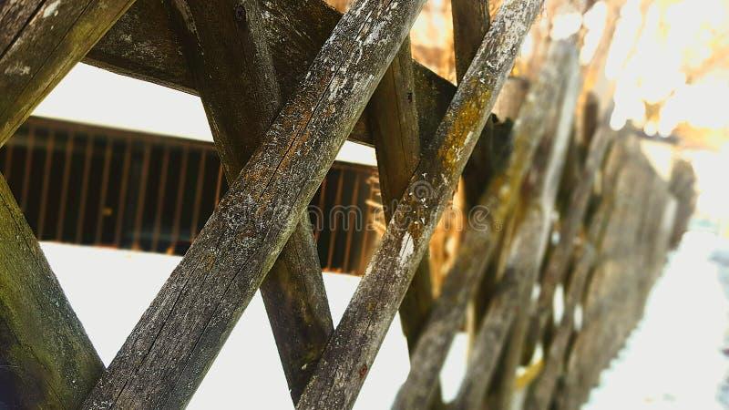 het hout is magisch royalty-vrije stock afbeeldingen