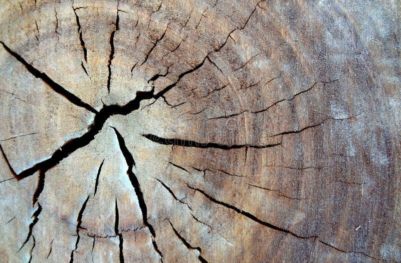 Het hout pikt stock foto