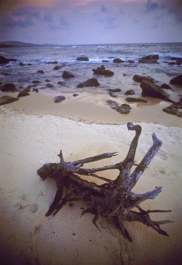 Het hout van de afwijking op het strand stock afbeelding