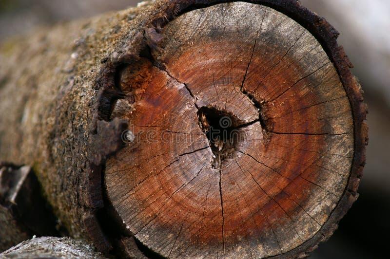 Het hout van de beuk stock afbeelding