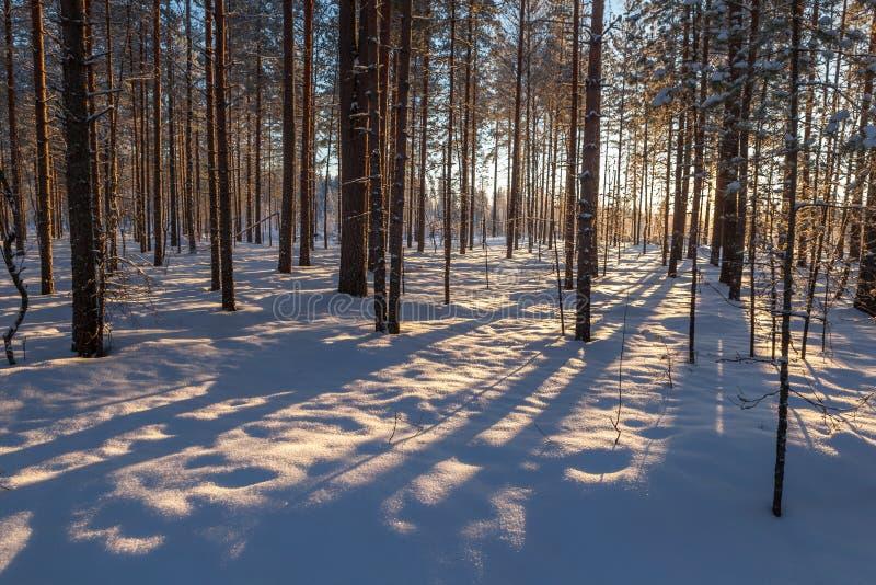 In het hout van de de wintersneeuw stock fotografie
