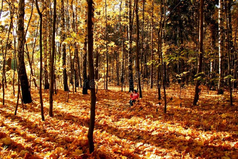 Het hout van de herfst. royalty-vrije stock afbeeldingen
