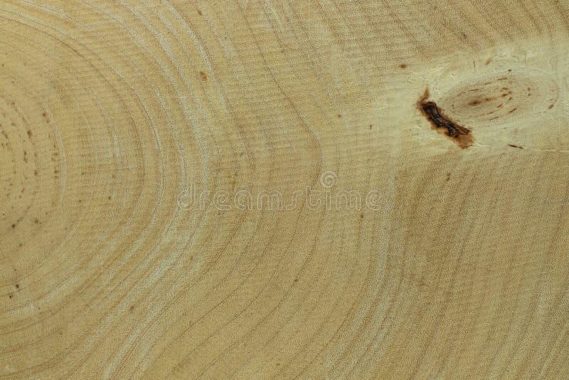 Het hout van de jaarringstamarinde stock fotografie