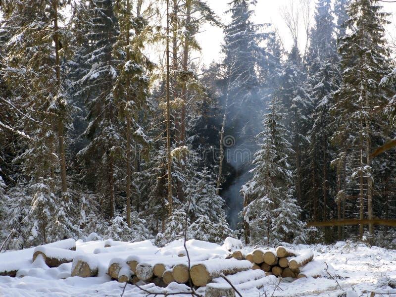 Het hout van de Winter stock fotografie