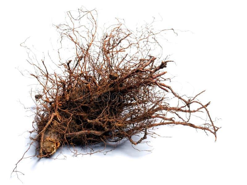 Het hout van de wortel royalty-vrije stock afbeelding