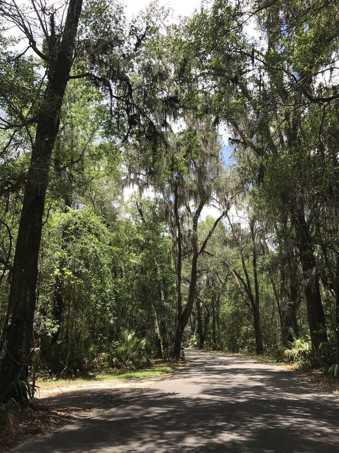 Het hout van Florida royalty-vrije stock afbeelding