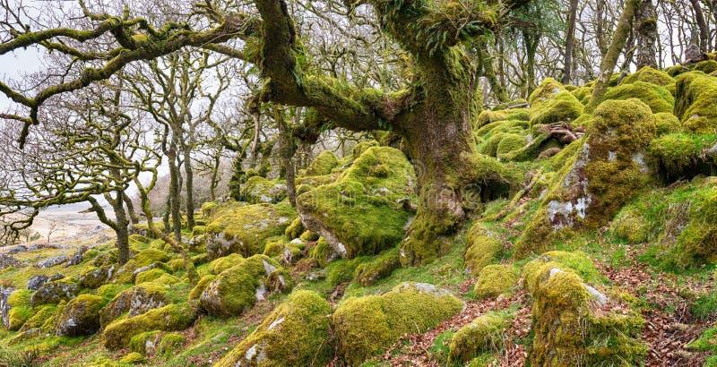 Het Hout van Wistman op Dartmoor stock afbeeldingen
