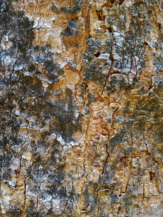 Het houten detail van de textuurboom stock foto's