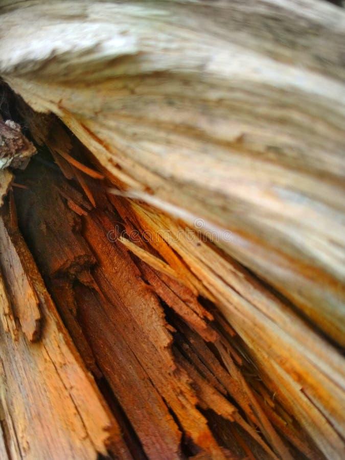 Het is houten in India stock fotografie