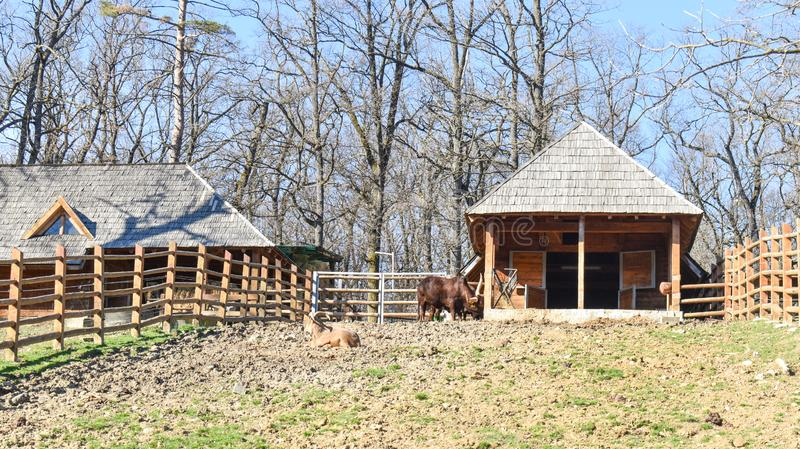 Het houten landbouwbedrijf met houten omheining in een zonnige mooie dag stock afbeeldingen