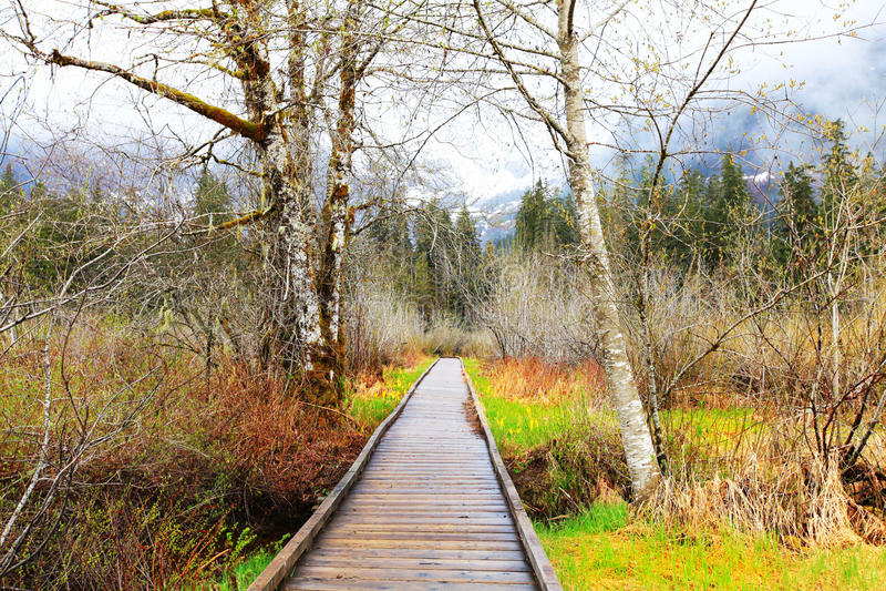 Het houten sleep en berklandschap van de bomen vroege lente. stock fotografie