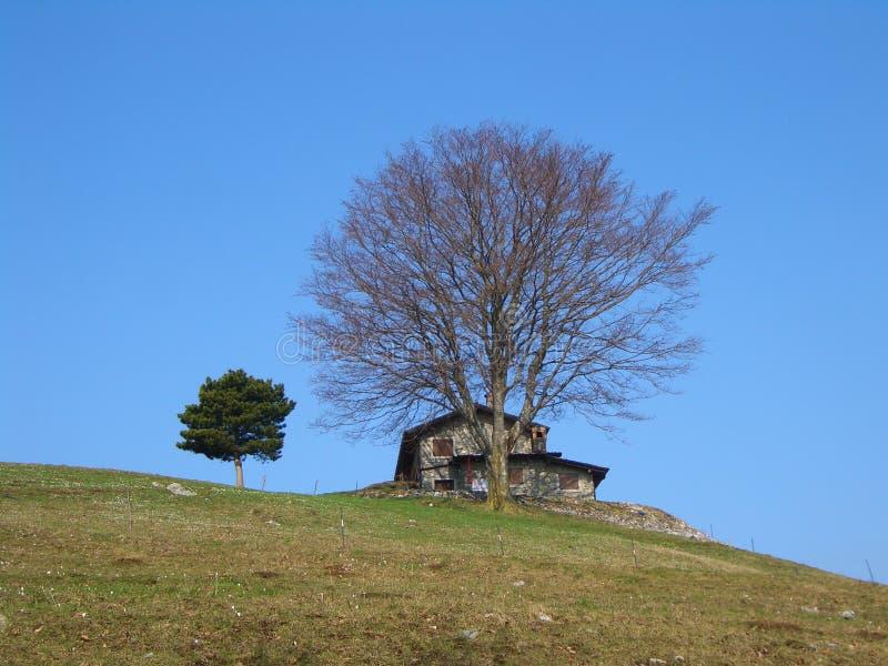 Het huis en de boom van de berg royalty-vrije stock foto