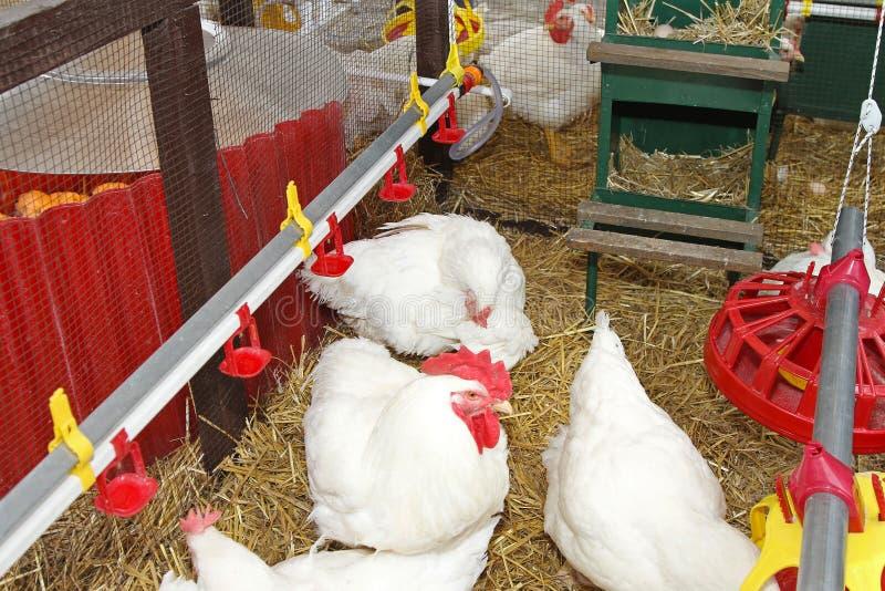 Het huis van de kip stock foto's