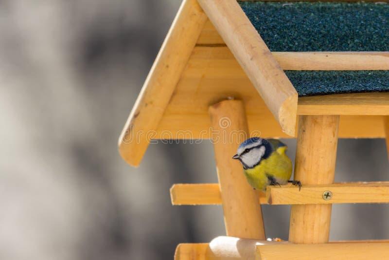 Het huis van de vogel in de tuin stock foto's