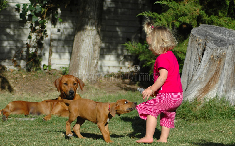 Het huisdier van het kind en van het puppy royalty-vrije stock afbeeldingen