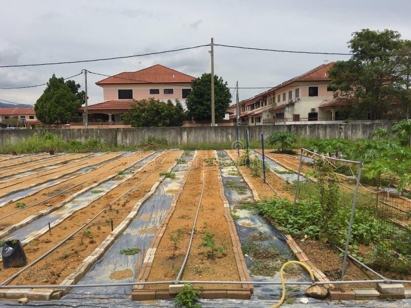 Het huislandbouw van de vestigings grote schaal in uw huistuin stock foto