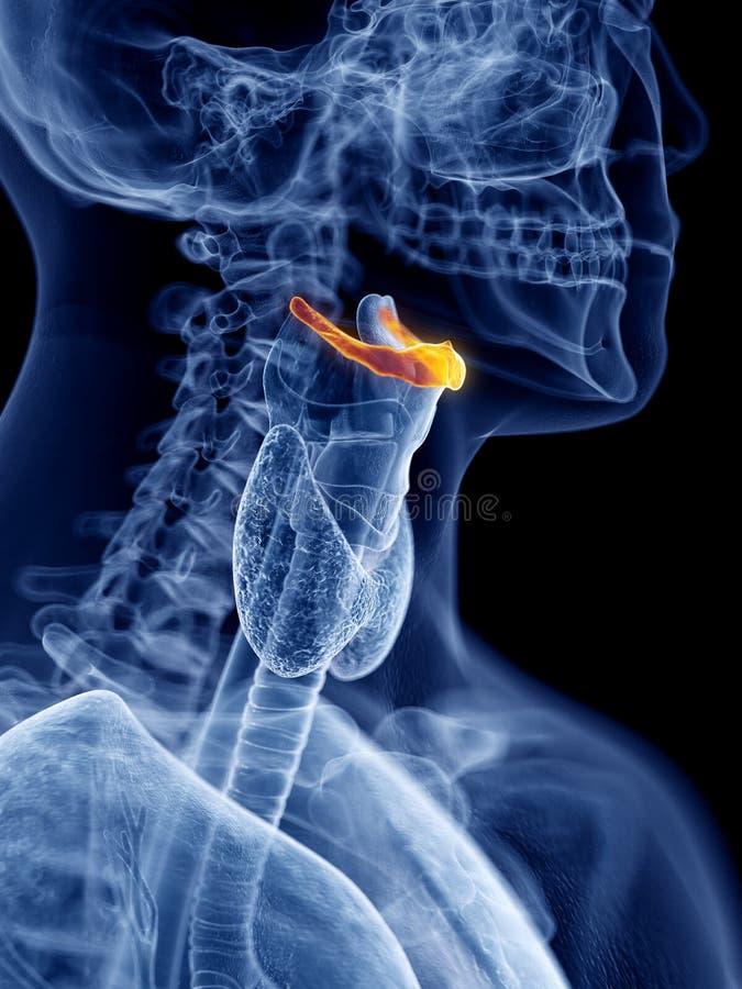 Het hyoid been stock illustratie