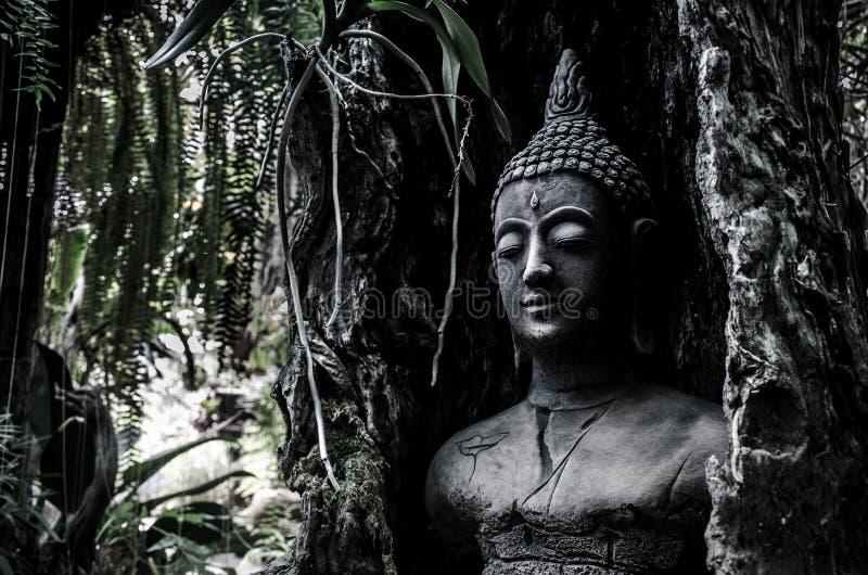 Het idool van Boedha in oude boom royalty-vrije stock foto