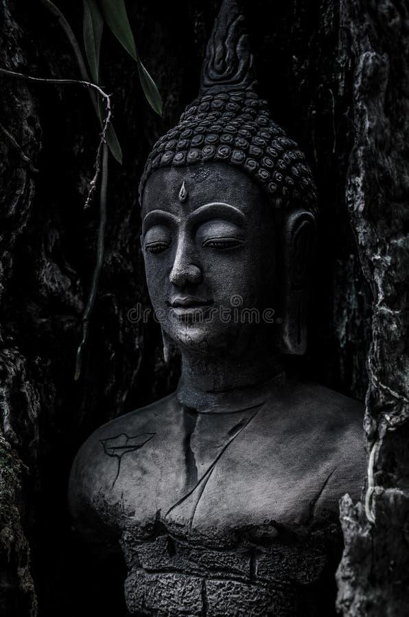 Het idool van Boedha in oude boom royalty-vrije stock fotografie