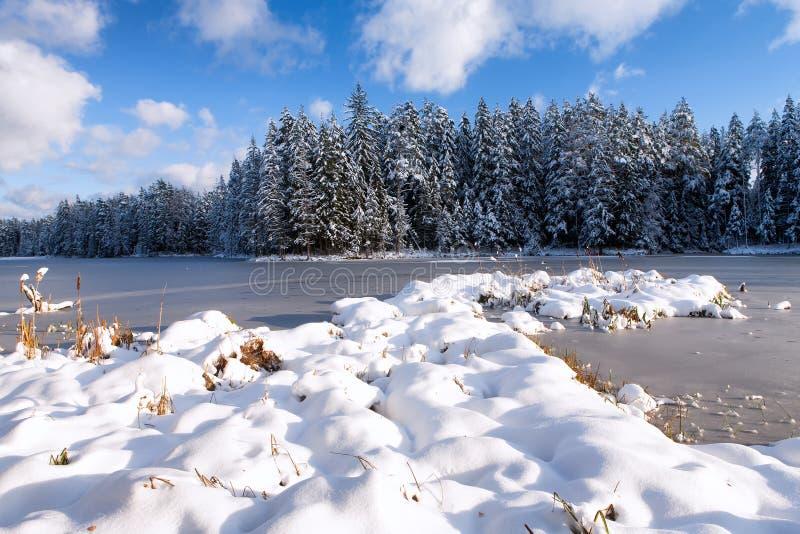Het ijs op het meer met een pijnboombos in de sneeuw stock afbeelding
