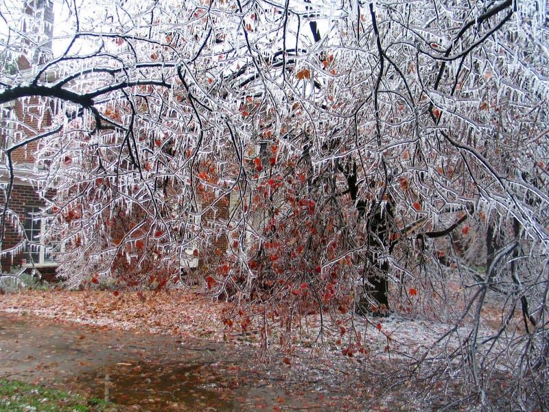 Het ijsonweer knoeit met met een laag bedekte bomen en gebroken lidmaten royalty-vrije stock foto's