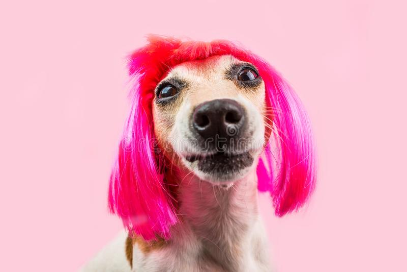 Het imiteren grappige hond in roze pruik royalty-vrije stock foto