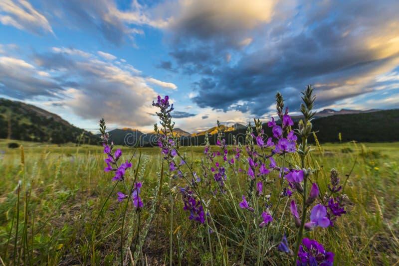 Het Indische Penseel bloeit het Landschap van Colorado royalty-vrije stock afbeeldingen