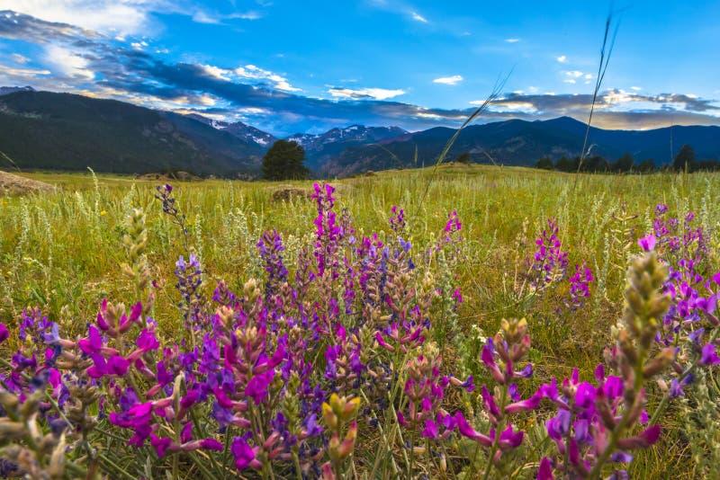 Het Indische Penseel bloeit het Landschap van Colorado stock fotografie